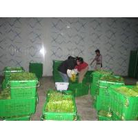 Wholesale Industrial Cold Room Containers , Refrigerated Sea Containers Explosion Proof from china suppliers