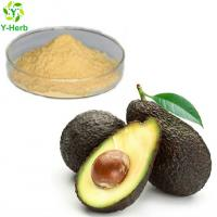 Wholesale Factory supply bulk avocado seed extract capsules powder avocado extract from china suppliers