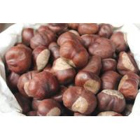 Wholesale manufacturer supply Horse Chestnut Extract, Aescin 20% 40% 98%, CAS No.: 6805-41-0, Aesculus hippocastanum Extract from china suppliers
