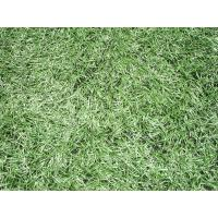 Wholesale Monofilament Synthetic Soccer Grass /   indoor turf carpet , eco friendly from china suppliers