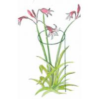Single Ring and Stem Plant Support protects pink flowers