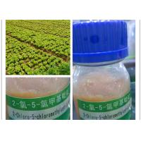 Wholesale CAS 70258-18-3 High Assay Broad Spectrum Imidacloprid Intermediate from china suppliers