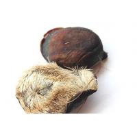 Buy cheap Musk Exodermis/Traditional chinese medicine,She Xiang Ke from wholesalers