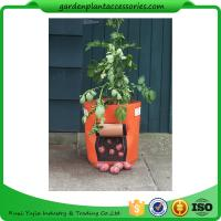 Wholesale Outdoor Garden Plant Accessories , Classic Line Tequila Sunrise Fabric Planter garden bags from china suppliers