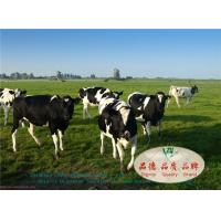Wholesale Ruminants Feed Guar Meal Korma , Rice Gluten Meal In Protein 55.00 – 60.00 % from china suppliers