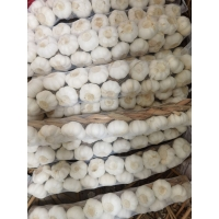 Wholesale Natural Prepacks Fresh Pure White Garlic and normal white fresh garlic from china suppliers