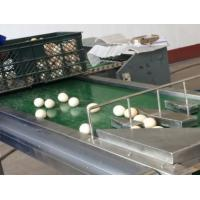 Wholesale Automatic 1-6 Lines Egg Stamping Machine Inkjet Coding Machine 1200x280x200mm from china suppliers