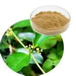 Wholesale Gymnema Extract Gymnemic acids 25%,Weight loss, reduce blood glucose and blood sugar from china suppliers