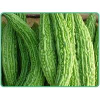 Wholesale Bitter Melon P.E. from china suppliers