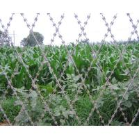 Wholesale House Diamond Fence Security Wire , Razor Barbed Wire Mesh Neat Appearance from china suppliers