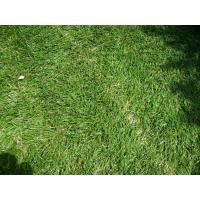 Wholesale Eco-friendly 11600Dtex Carpet Artificial Grass 35mm , Gauge 3/8 for Outdoor from china suppliers