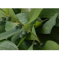 Quality Polygonatum Odoratum Extract Natural Health Supplements Polysaccharides for sale