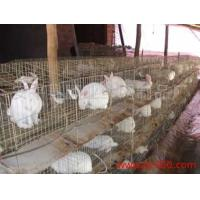 Buy cheap Rabbit cages rabbit farming cages from wholesalers
