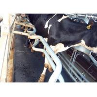 Wholesale Endure Moderate Milking Machine Spares Rubber Mat For Cows Standing from china suppliers