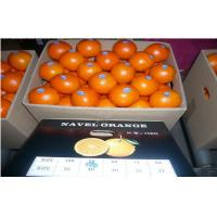 Wholesale High Carotene Golden Sour Fresh Navel Orange Juicy For Children / Kids from china suppliers