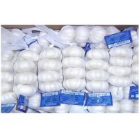 Wholesale Pure White Organic Fresh Garlic Fresh For Cooking , Medicinal 4.5cm - 6.5cm, Strong bactericidal from china suppliers