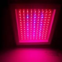 Wholesale 120W 50, 000 Hours Lifespan Built-in cooling system High Power LED Grow Light from china suppliers
