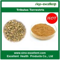 China Top Grade Tribulus Terrestris on sale