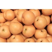 Wholesale Fresh Huangguan / Crown Pear from china suppliers