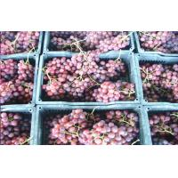 Wholesale Delicious Crimson Thompson Flame Red Globe Grapes Containing Vitamin B6, red or purple - red, Pericarp thick from china suppliers