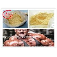 Wholesale 99 % Purity  Ananbolic Steroid Hormone Powder Trenbolone Acetate for Muscle Growth CAS 10161 - 34 - 9 from china suppliers