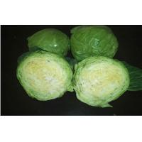 Wholesale Fresh Green Round Chinese Napa Cabbage from china suppliers