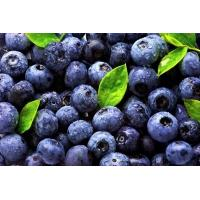 Wholesale Blueberry Extract, 5%-30% anthocyanidin, 5%-36% anthocyanin, exporter, Shaanxi Yongyuan Bio-Tech, high quality from china suppliers
