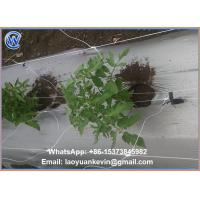 Buy cheap 100% new virgin material plastic bop trellis netting/plant support netting with uv supplier / BOP Stretched Net from wholesalers