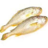 Wholesale 2016 Newly coming Good Price Fish Fresh Frozen Yellow Croaker on Sale. from china suppliers