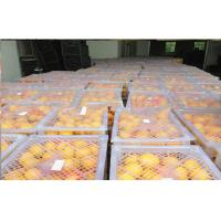 Wholesale Citrus Fresh Navel Orange Contains Carbohydrates Vitamin C , GLOBAL GAP from china suppliers