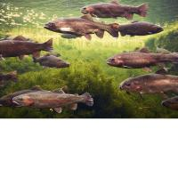Wholesale 3D Lenticular Picture/Image / Trout C/ 3D Lenticular Printing from china suppliers