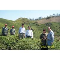 Lin'an Dayang Tea Industry Co., Ltd