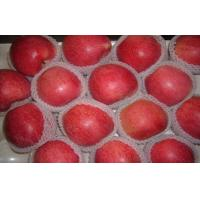 Wholesale Big Bright Red Sweet Organic Apple Thick Skin From Shanxi QinGuan For Storage from china suppliers