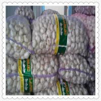 Wholesale 2015 newest hot selling CHINESE FRESH NORMAL WHITE GARLIC from china suppliers
