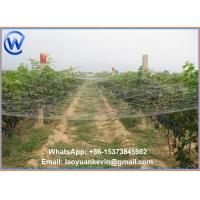 Wholesale Various Colours, Various Sizes Anti Pigeon, Gull, Sparrow, Starling Bird Netting from china suppliers