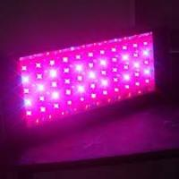 Wholesale LED Grow Light 300W Grow Light from china suppliers