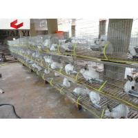 Wholesale Wire Mesh Rabbit Cages for Rabbit Farm from china suppliers