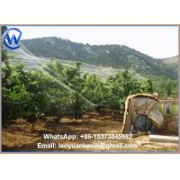 Wholesale Bird Net-Garden Netting Protection Plant Seedlings from china suppliers