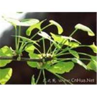 Wholesale Excellent breast enlarger made of herbs from china suppliers