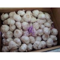 Wholesale Fresh Pure White Garlic Best Qualty Competitive Price China from china suppliers