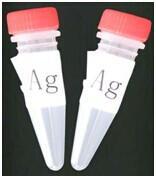 Wholesale Ketamine (KET) BSA conjugant from china suppliers