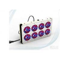 Wholesale Easy Operation Red Blue Led Grow Lights For Weed 50000 Hrs Lifespan from china suppliers
