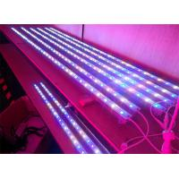 Wholesale Low Consumption Blue 450 - 460nm E27 9W Par38 LED Reef Aquarium Lighting bar For Reef  from china suppliers