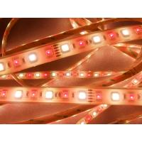 Wholesale Decoration IP67 Waterproof LED Strip DC24V SMD 5050 led flex strip Warm white from china suppliers