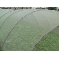 Wholesale Green House Using Anti-insect screen 40x25 mesh,PE Plant Anti Insect Net from china suppliers