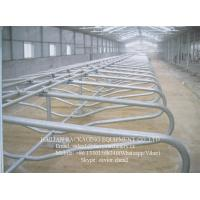 Wholesale Single Row Type Cow Milking Stall With Hot Galvanized Steel Pipe from china suppliers