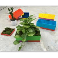 Buy cheap Grow flowers from wholesalers