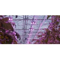 Wholesale 185W led green grow light Spectrum led plant lights A+ 3years warranty Meanwell driver aluminum /Sliver from china suppliers