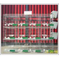 Buy cheap Quail cages farming cages for quail from wholesalers