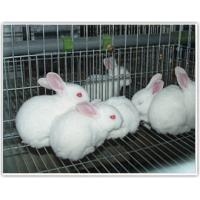 Buy cheap Animal farming cages welded wire cages for animal feeding from wholesalers